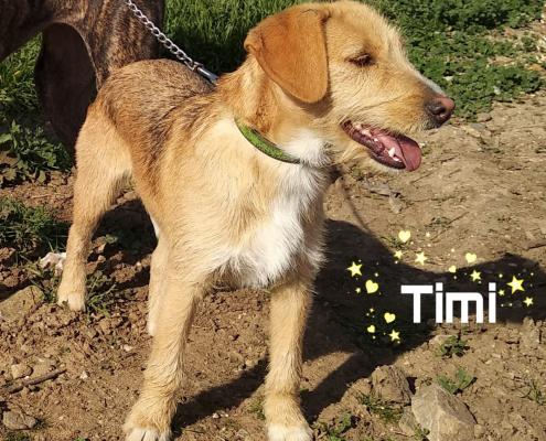 "</p> <p style=""text-align: center;"">Timi</p> <p>"